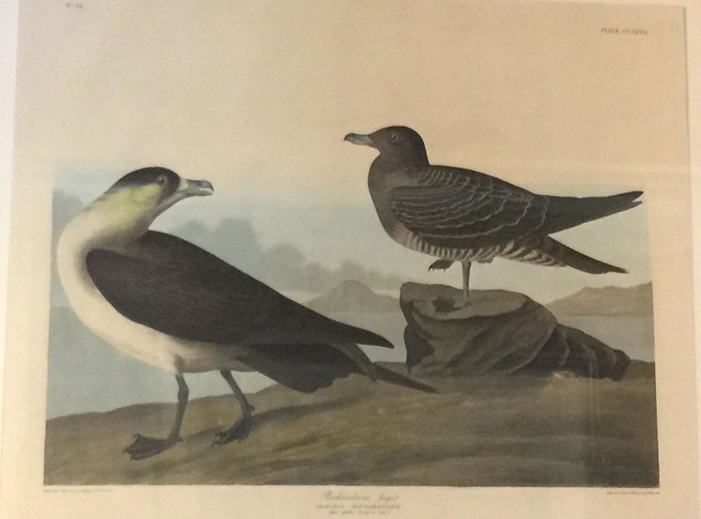 """Richardson Jager"" John James Audubon"